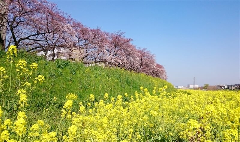 Spring Has Come !!