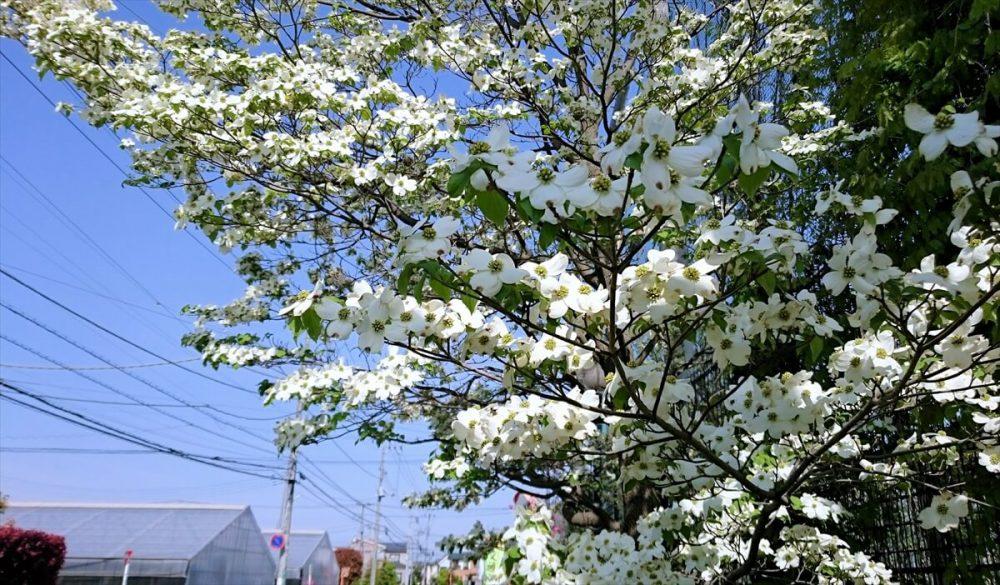 春の流れに 。。。